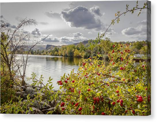 Wild Berries Canvas Print - Swallows Nest Rock From The Park by Brad Stinson