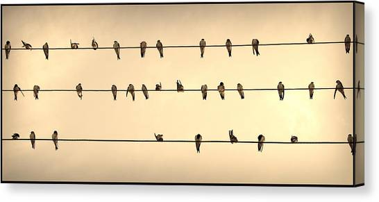 Swallows On Wires Canvas Print