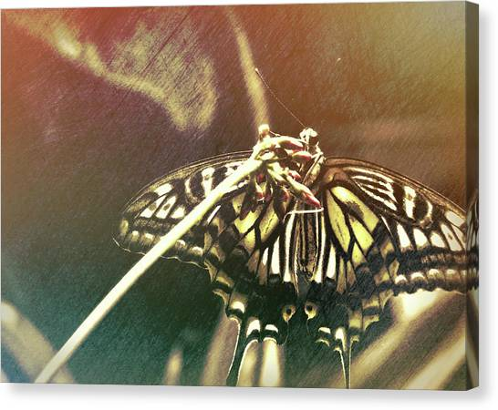 Swallowtail Canvas Print by JAMART Photography