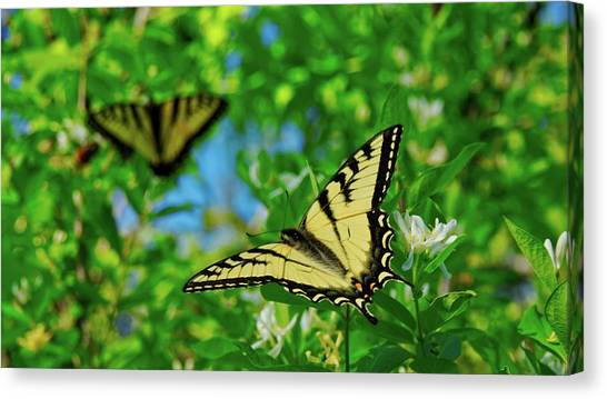 Swallowtails Canvas Print