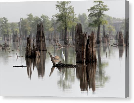 Atchafalaya Basin Canvas Print - Swamp Bird by Susan Rissi Tregoning