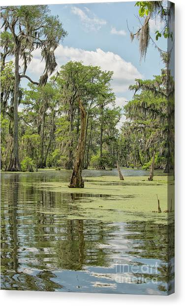 Atchafalaya Basin Canvas Print - Swamp Landscape by Patricia Hofmeester