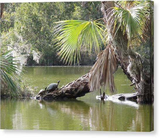 Canvas Print - Swamp Life by Red Cross