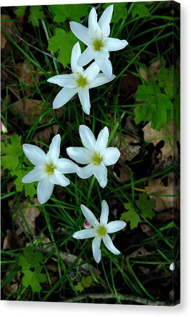Swamp Lilies Canvas Print