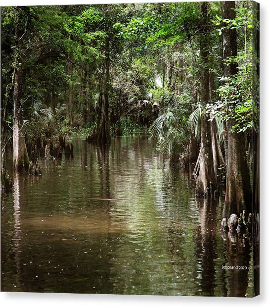 Swamp Road Canvas Print