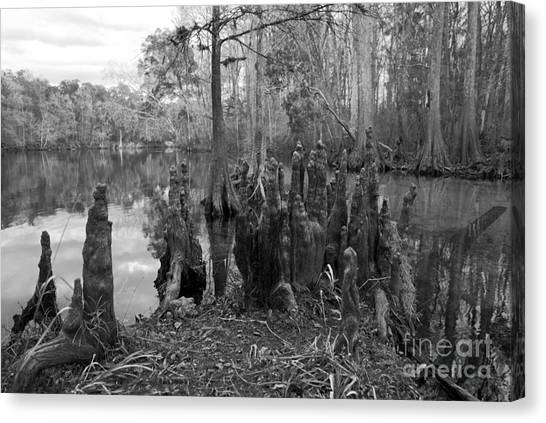 Swamp Stump Canvas Print