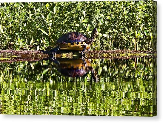Swamp Turtle Sunning On A Log Canvas Print by Michael Whitaker