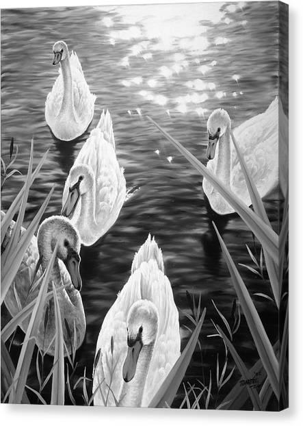 Swan 2 Canvas Print