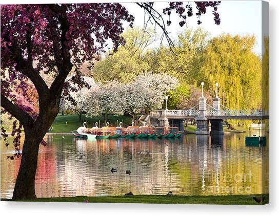 Swan Boats With Apple Blossoms Canvas Print