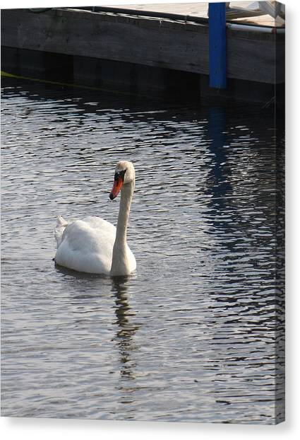 Swan Canvas Print by Gerald Mitchell