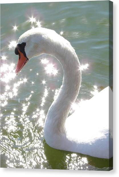 Swan II Canvas Print