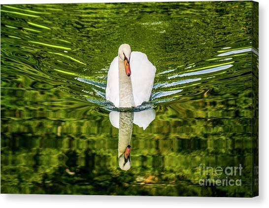 Swan Lake Nature Photo 892 Canvas Print