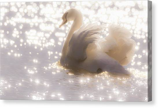 Swan Of The Glittery Early Evening Canvas Print