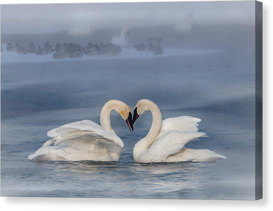 Canvas Print featuring the photograph Swan Valentine - Blue by Patti Deters