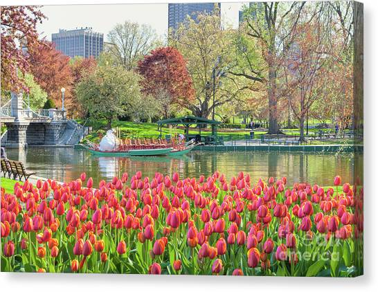 Swans And Tulips 2 Canvas Print