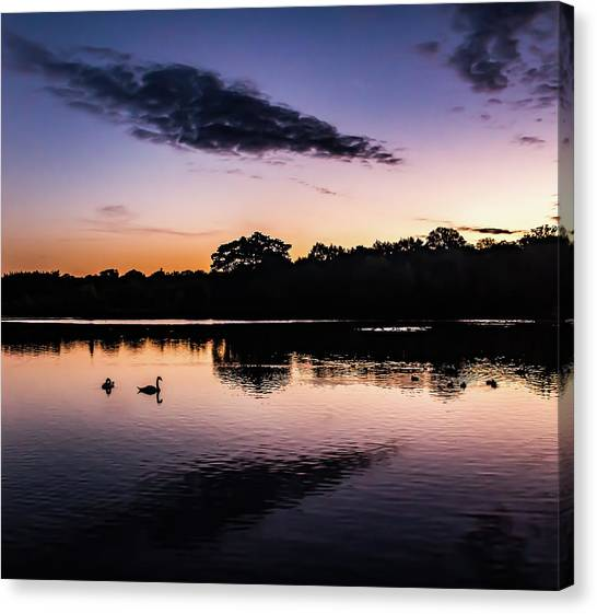 Swans At Sunrise Canvas Print