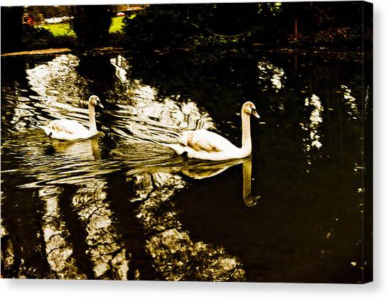 Swans On River Wey Canvas Print