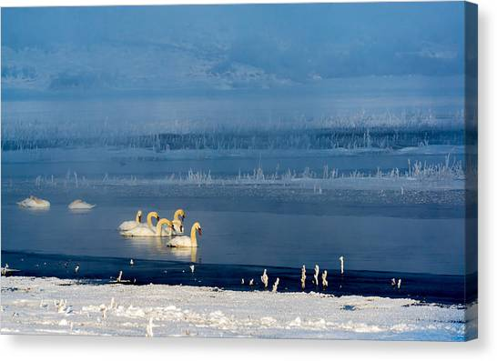 Swans On The Lake Canvas Print