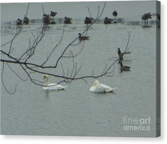 Swans With Geese Canvas Print