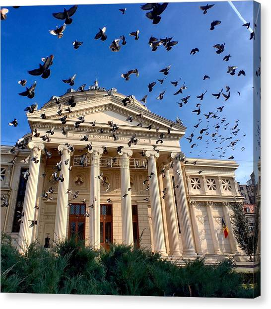 Canvas Print featuring the photograph Pigeon Swarm At The Ateneul Roman In Bucharest, Romania by Chris Feichtner