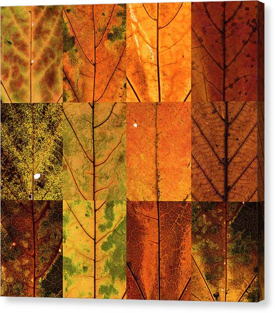Gerhard Richter Canvas Print - Swatches - Autumn Leaves Inspired By Gerhard Richter by Shankar Adiseshan
