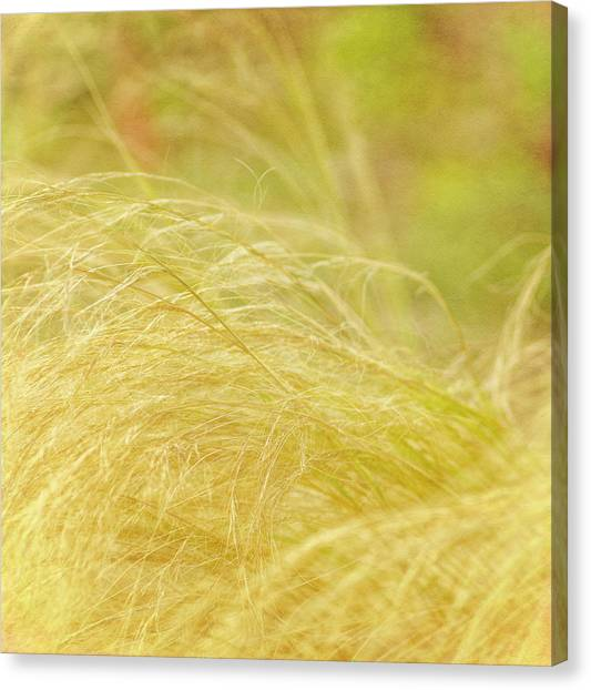 Swaying  Canvas Print