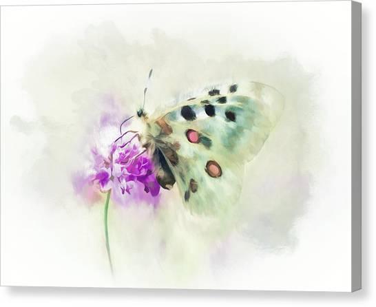Canvas Print - Sweet Butterfly Nectar by Amanda Lakey
