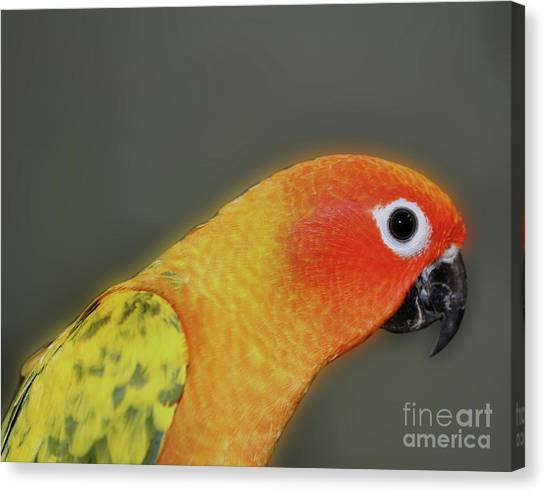 Sweet Face Canvas Print