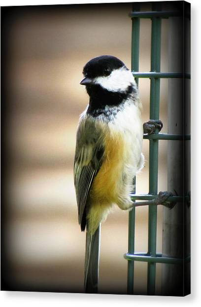 Sweet Little Chickadee Canvas Print by Lisa Jayne Konopka