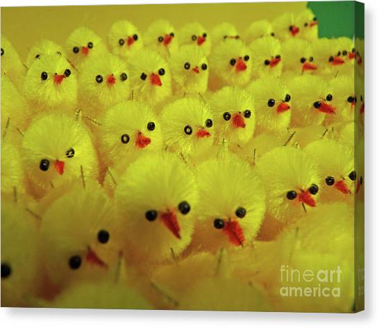 Sweet Little Chicks Waiting For Easter Canvas Print