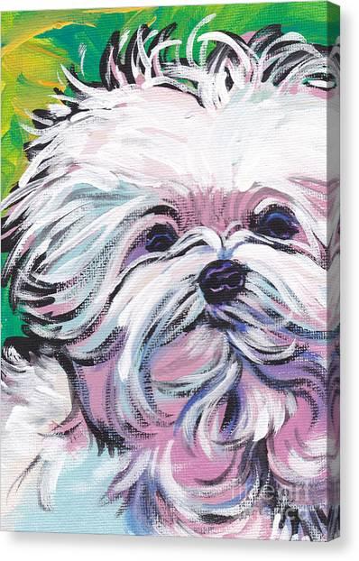 Maltese Canvas Print - Sweet Maltese  by Lea S