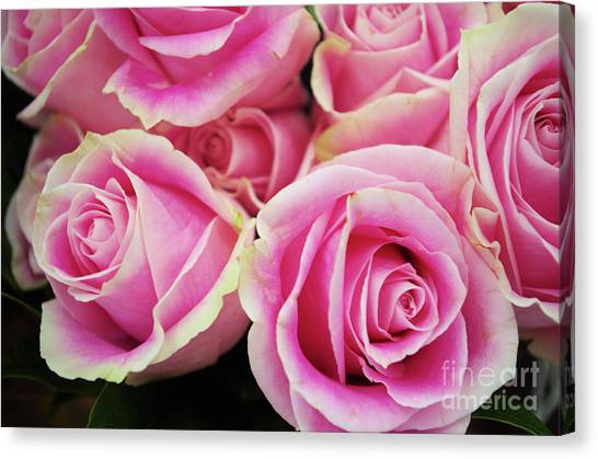 Sweet Rose For All The Lovely Ladies Who Comment On My Work Canvas Print
