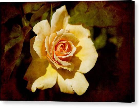 Sweet Rose Canvas Print
