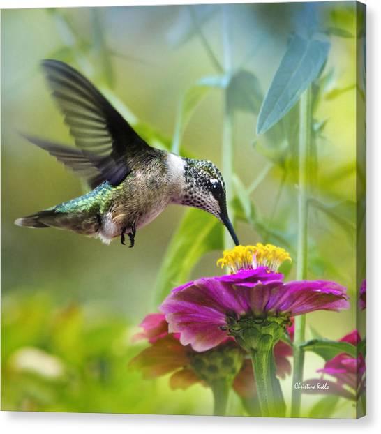 Sweet Success Hummingbird Square Canvas Print