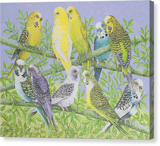 Canaries Canvas Print - Sweet Talking by Pat Scott