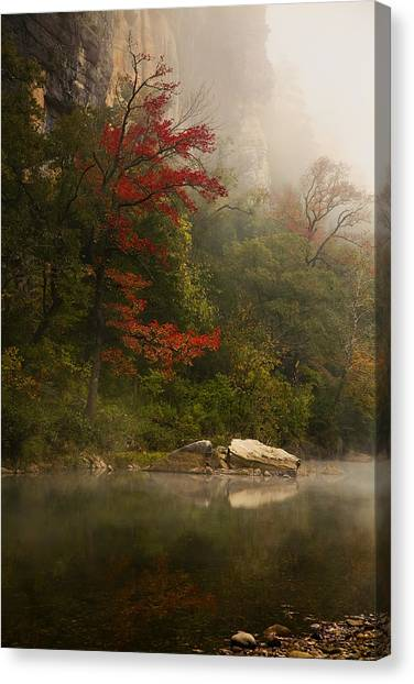 Sweetgum In The Mist At Steel Creek Canvas Print