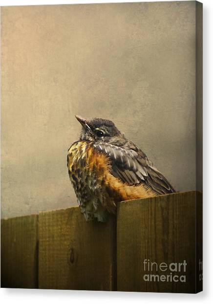 Sweetly Sitting Canvas Print