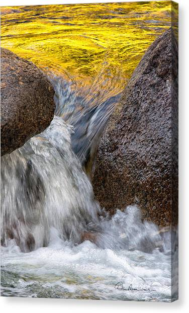 Swift Gold 6333 Canvas Print