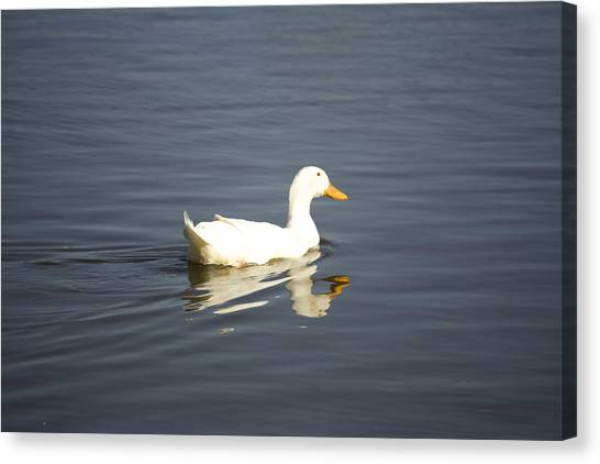 Swimming Away Canvas Print by Magda Levin-Gutierrez
