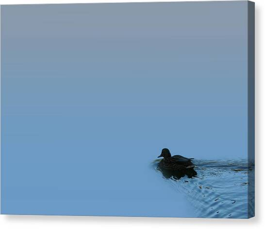 Swimming Duck Canvas Print