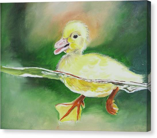 Swimming Duckling Canvas Print