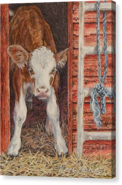 Swiss Calf, Got Milk? Canvas Print