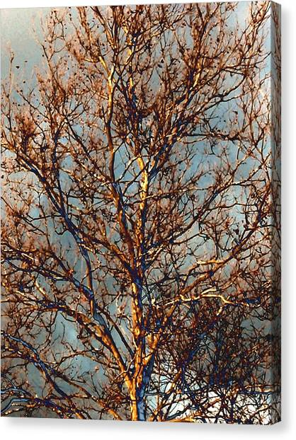 Sycamore Against November Sky Canvas Print by Beth Akerman