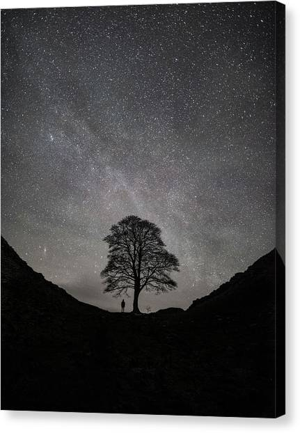 Robins Canvas Print - Sycamore Gap  by Mark Mc neill