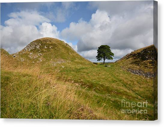 Northumberland Canvas Print - Sycamore Gap by Smart Aviation