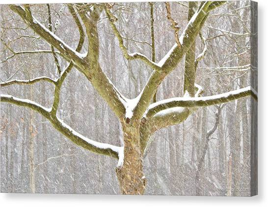 University Of Rhode Island Uri Canvas Print - Sycamore In Storm by Jan Armor