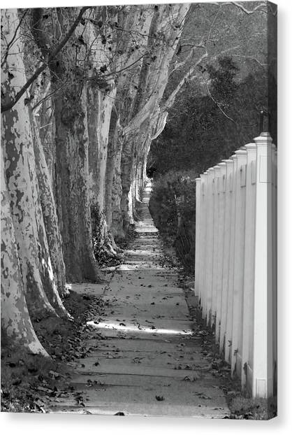Sycamore Walk-grayscale Version Canvas Print