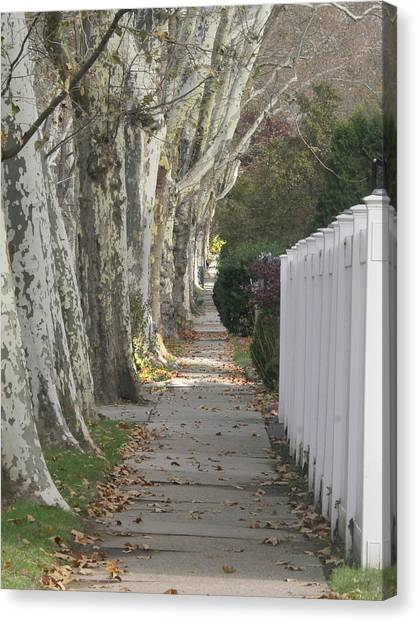 Sycamore Walk Canvas Print