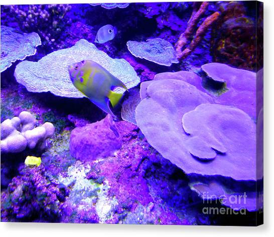 Canvas Print - Ta Purple Coral And Fish by Francesca Mackenney