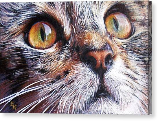 Tabby Look 2 Canvas Print